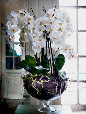 Decorate Your Home With Flowers Darlings Of Chelsea Design Blog