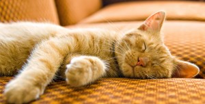 How to Stop Cats Scratching and Clawing Your Sofa